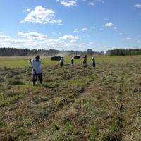 Паломники из города Каргополя помогли братии монастыря в заготовке сена.